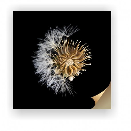 Canvas Print - Taraxacum Officinale